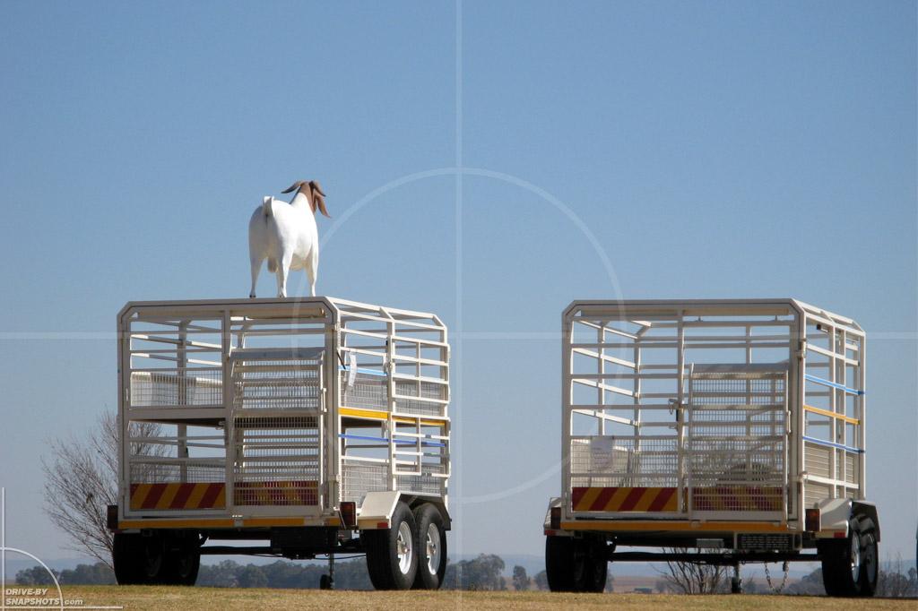 Livestock Trailer | Drive-by Snapshots by Sebastian Motsch (2007)